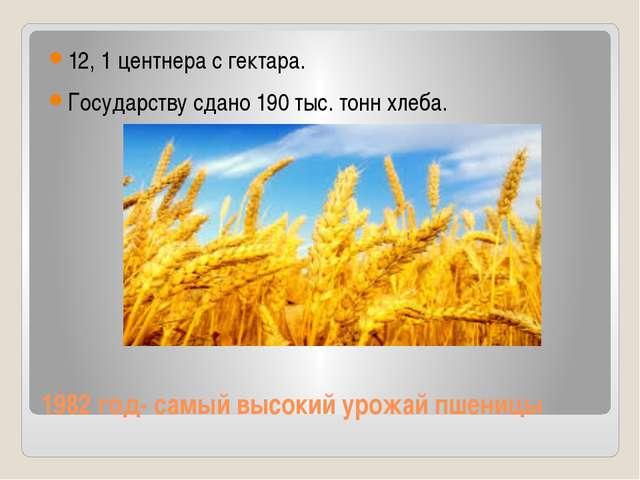1982 год- самый высокий урожай пшеницы 12, 1 центнера с гектара. Государству...