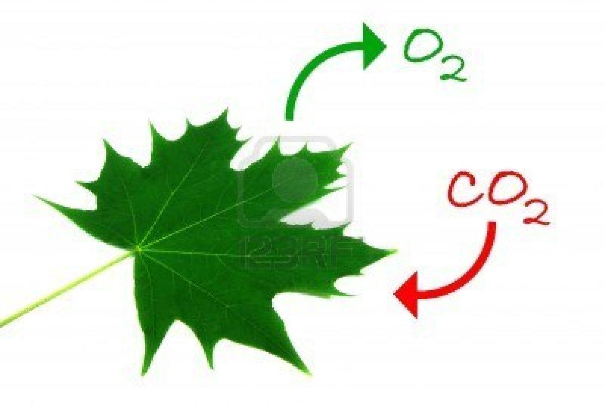 http://us.123rf.com/400wm/400/400/trombax/trombax0811/trombax081100056/3841983-illustration-of-the-natural-process-of-photosynthesis.jpg