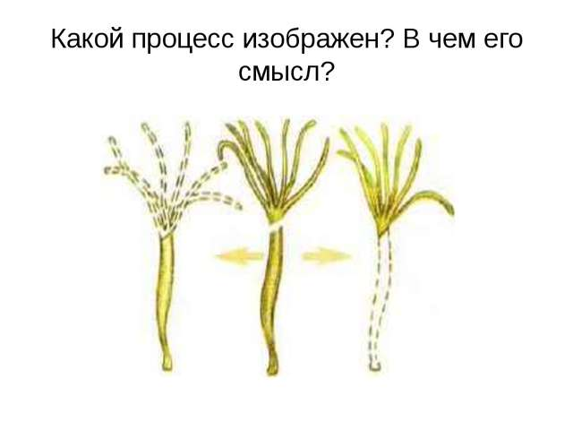 Какой процесс изображен? В чем его смысл?