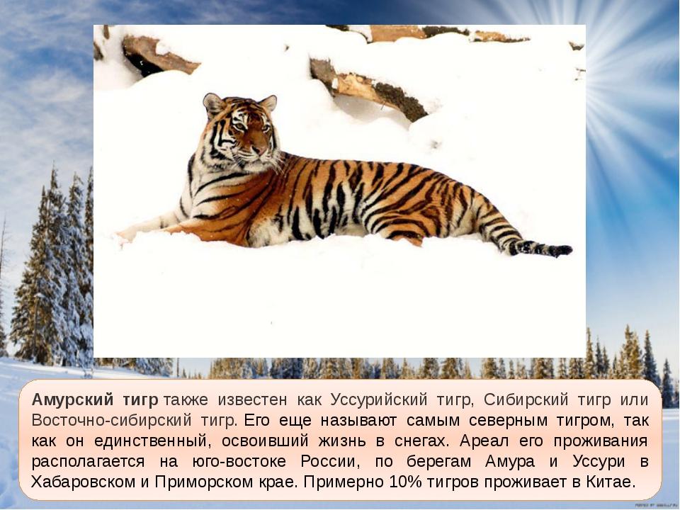 когда амурский тигр картинка с описанием был известен как
