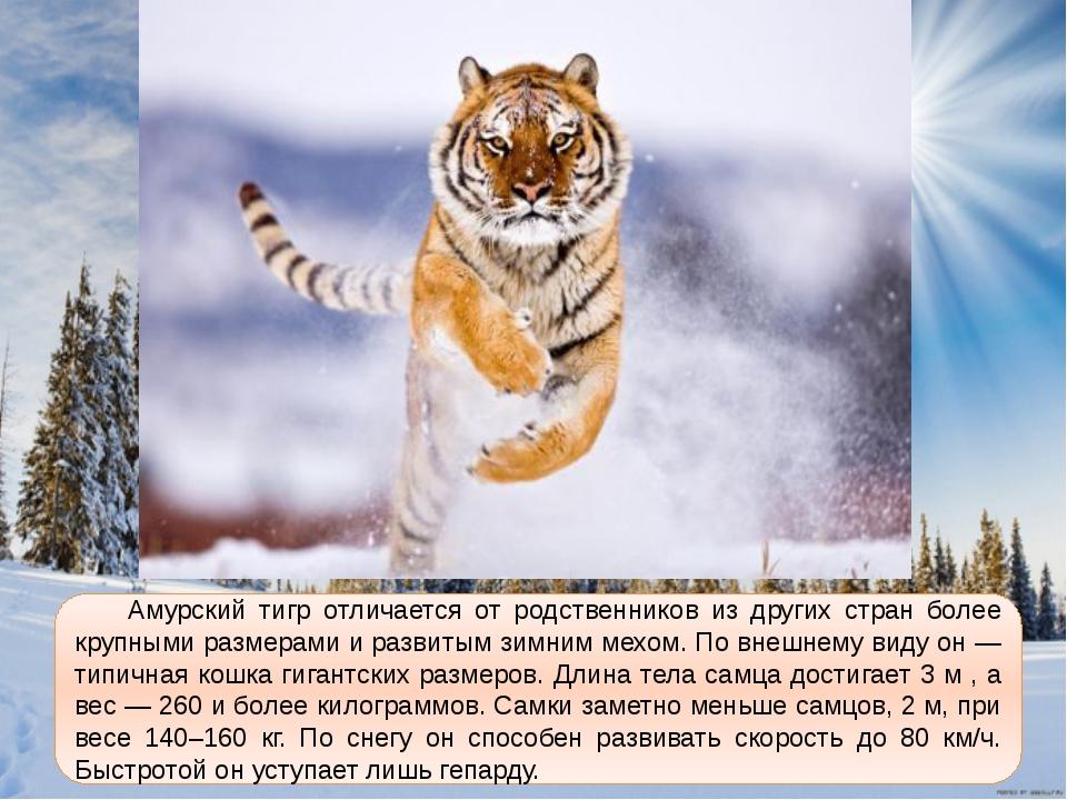 основные письмо браконьеру про амурского тигра побороть