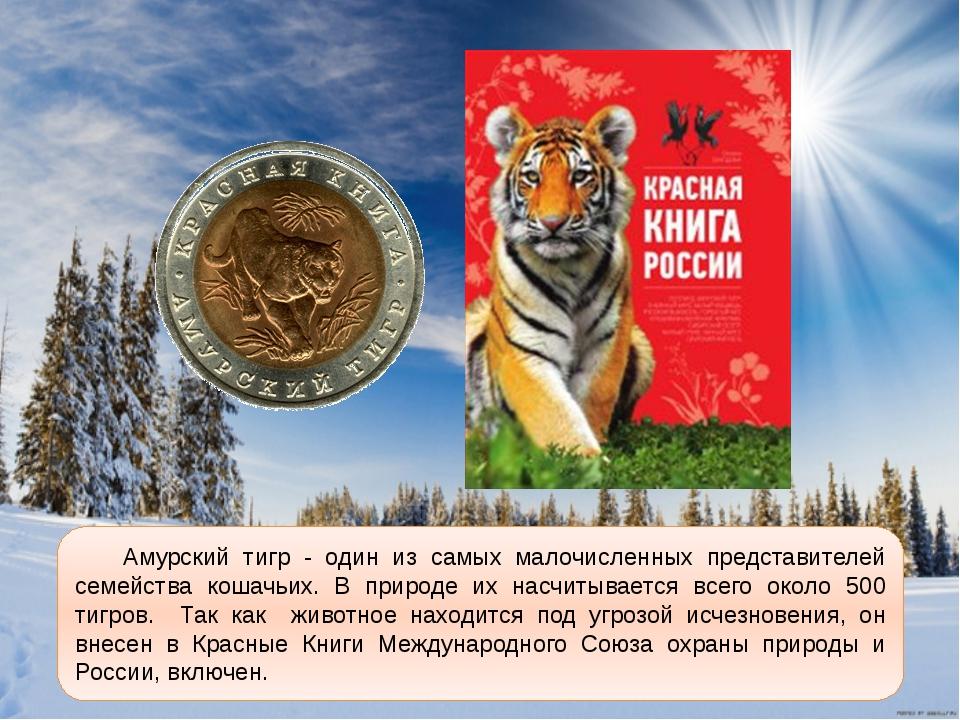 красная книга россии амурский тигр фото и краткое описание