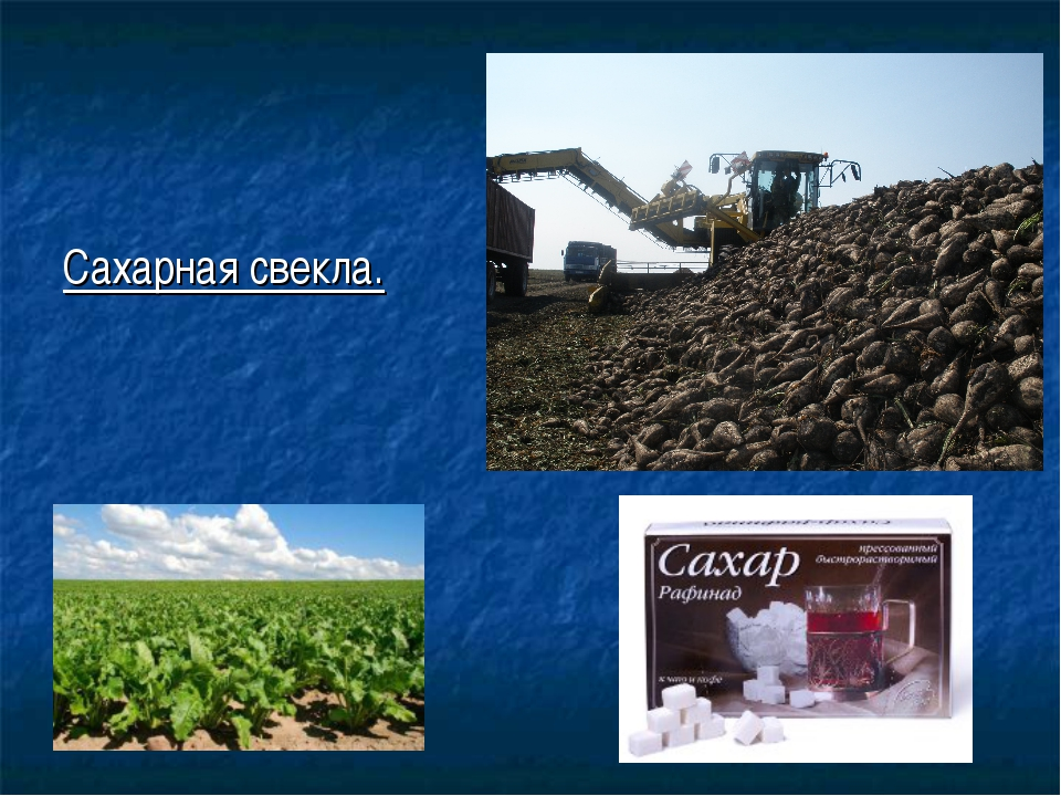 Технология выращивания сахарного буряка 93