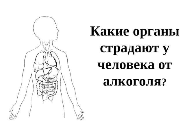 Какие органы страдают у человека от алкоголя?