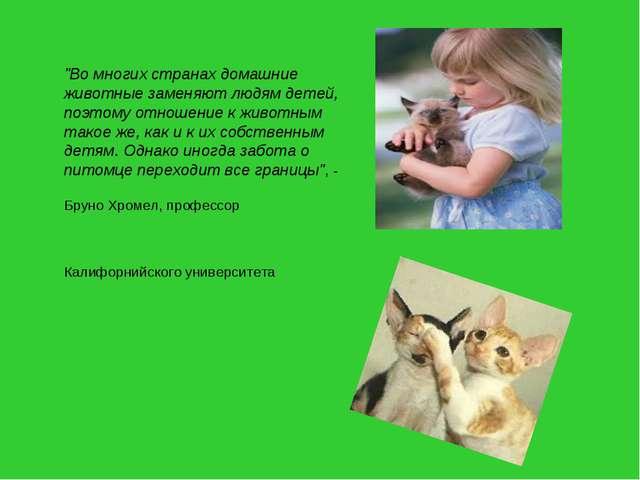 """""""Во многих странах домашние животные заменяют людям детей, поэтому отношение..."""