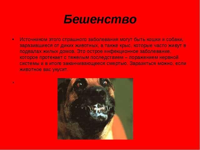 Бешенство Источником этого страшного заболевания могут быть кошки и собаки, з...