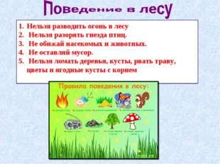 Нельзя разводить огонь в лесу Нельзя разорять гнезда птиц. Не обижай насекомы