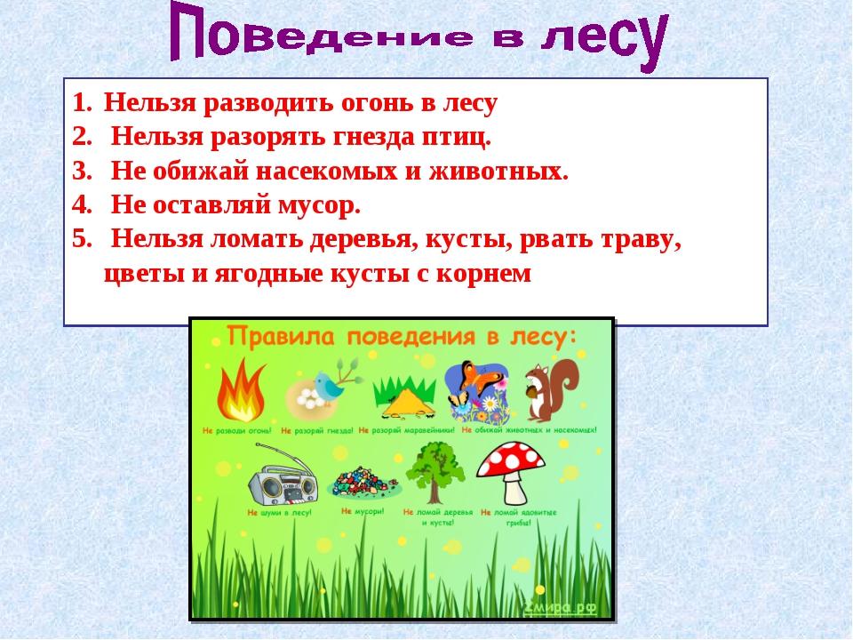 Нельзя разводить огонь в лесу Нельзя разорять гнезда птиц. Не обижай насекомы...