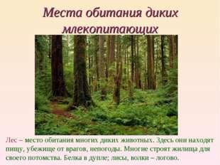 Места обитания диких млекопитающих Лес – место обитания многих диких животных