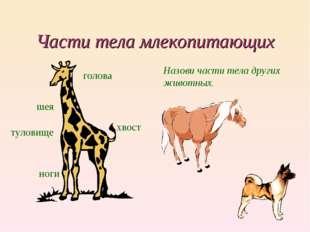Части тела млекопитающих голова шея туловище хвост ноги Назови части тела дру