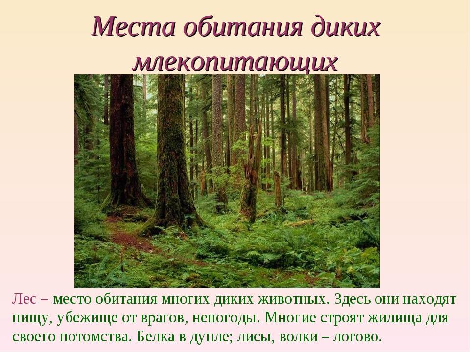 Места обитания диких млекопитающих Лес – место обитания многих диких животных...