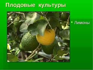 Плодовые культуры Лимоны