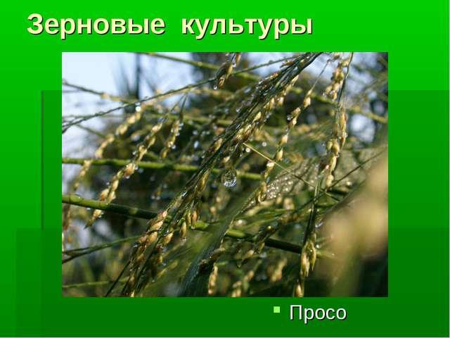 Зерновые культуры Просо