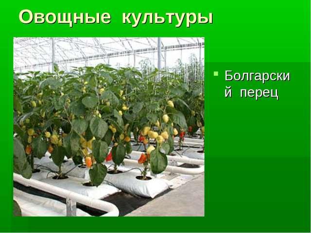 Овощные культуры Болгарский перец