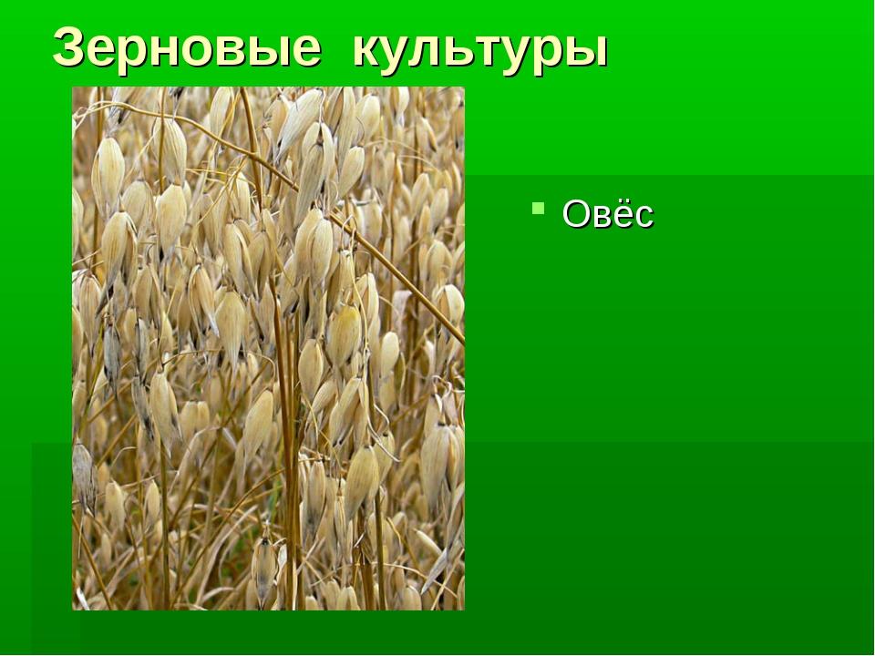 зерновые культуры картинки с названием один