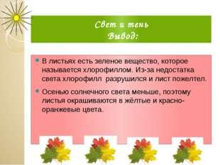 Свет и тень Вывод: В листьях есть зеленое вещество, которое называется хлороф