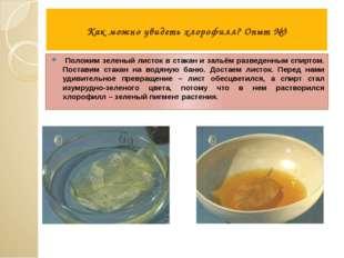 Как можно увидеть хлорофилл? Опыт №3 Положим зеленый листок в стакан и зальё