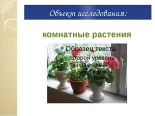 Объект исследования: комнатные растения