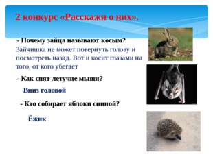 2 конкурс «Расскажи о них». - Почему зайца называют косым? Зайчишка не может