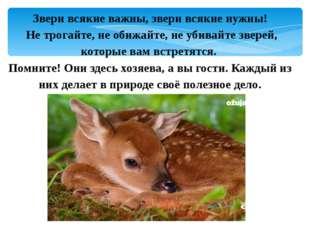 Звери всякие важны, звери всякие нужны! Не трогайте, не обижайте, не убивайте