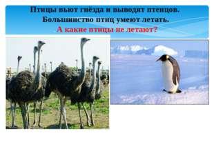Птицы вьют гнёзда и выводят птенцов. Большинство птиц умеют летать. . А какие