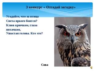 3 конкурс « Отгадай загадку» Угадайте, что за птица Света яркого боится? Клюв