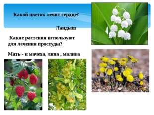 Какой цветок лечит сердце? Ландыш Какие растения используют для лечения прост