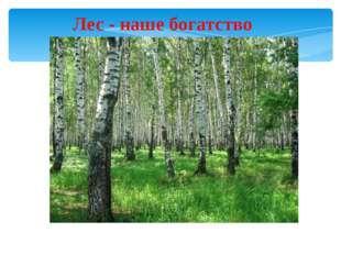 Лес - наше богатство