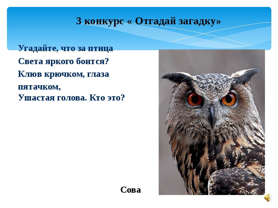 3 конкурс « Отгадай загадку» Угадайте, что за птица Света яркого боится? Клюв...