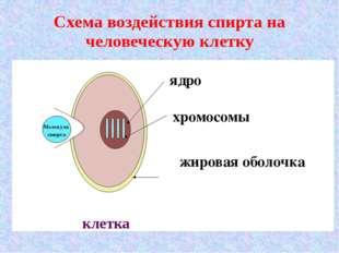 Схема воздействия спирта на человеческую клетку Молекула спирта клетка жиров