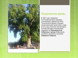 Лекарственное дерево. В 1837 году генералом Н.Н.Раевским были завезены тюльпа