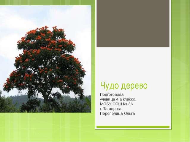 Чудо дерево Подготовила ученица 4 а класса МОБУ СОШ № 36 г. Таганрога Перепел...