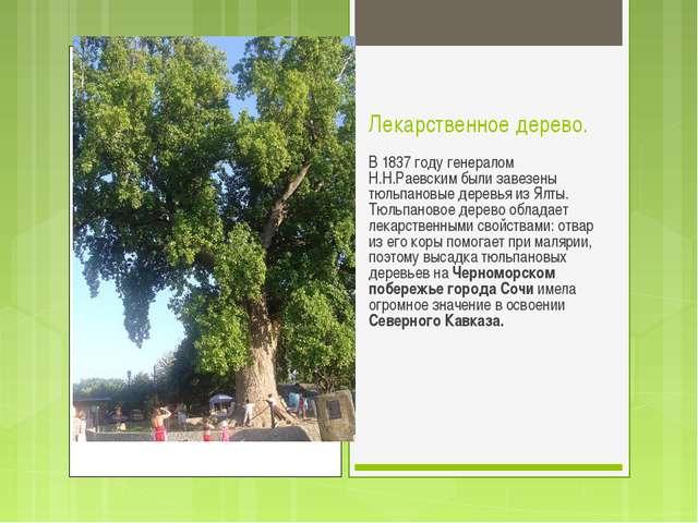 Лекарственное дерево. В 1837 году генералом Н.Н.Раевским были завезены тюльпа...