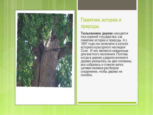 Памятник истории и природы. Тюльпановое дерево находится под охраной государс...