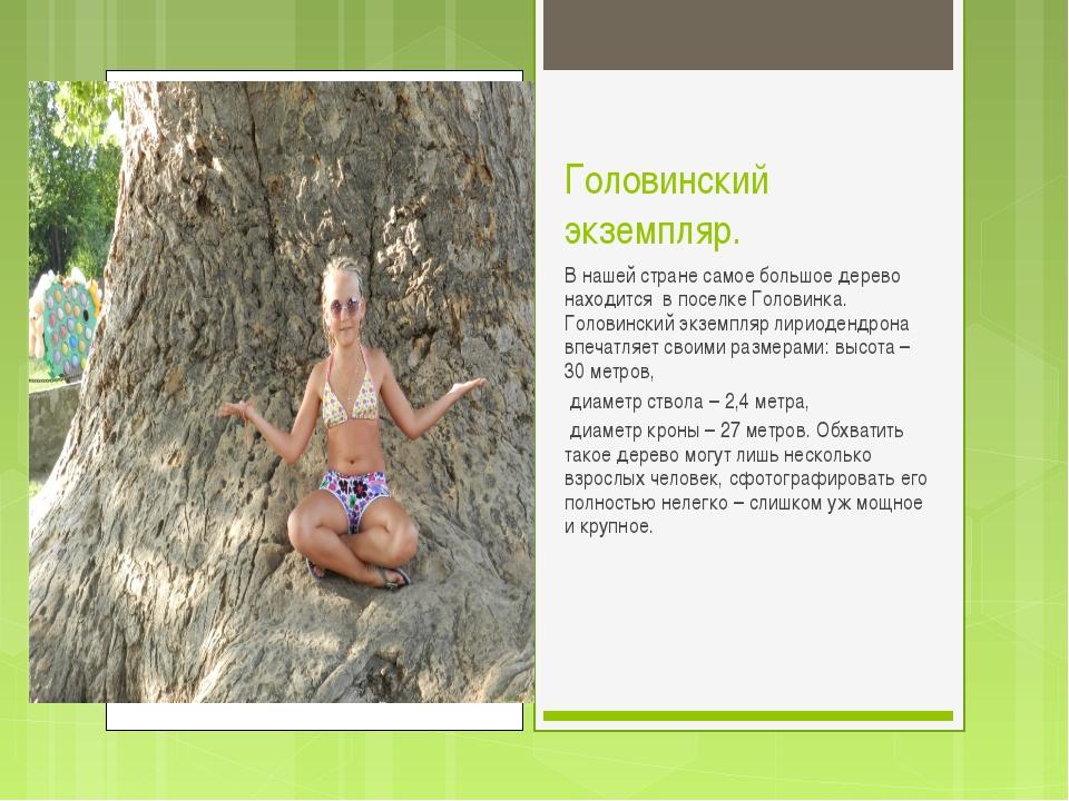 Головинский экземпляр. В нашей стране самое большое дерево находится в поселк...