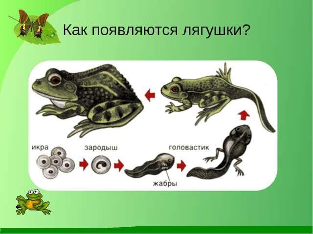 Как появляются лягушки?