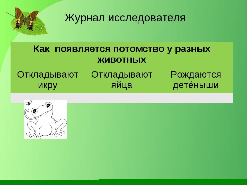 Журнал исследователя Как появляется потомство у разных животных Откладывают...