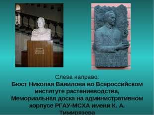 Слева направо: Бюст Николая Вавилова во Всероссийском институте растениеводст