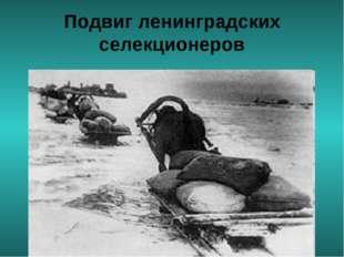 Подвиг ленинградских селекционеров