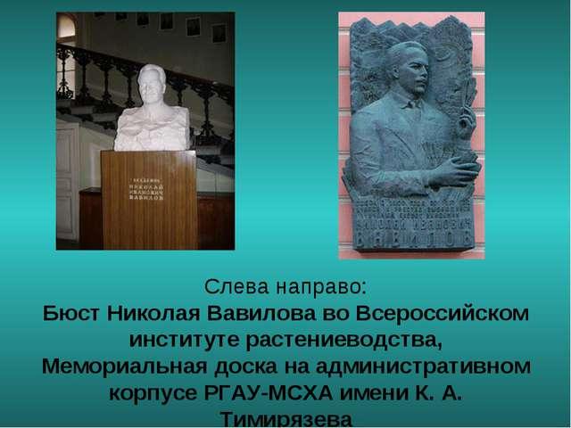 Слева направо: Бюст Николая Вавилова во Всероссийском институте растениеводст...