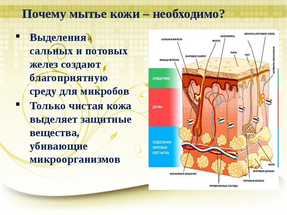 Почему мытье кожи – необходимо? Выделения сальных и потовых желез создают бла...