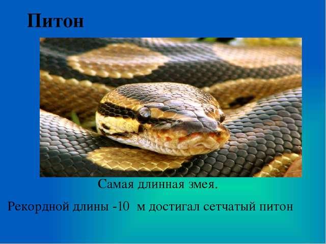Питон Самая длинная змея. Рекордной длины -10 м достигал сетчатый питон