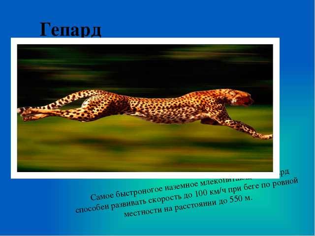 Гепард Самое быстроногое наземное млекопитающее. Гепард способен развивать ск...