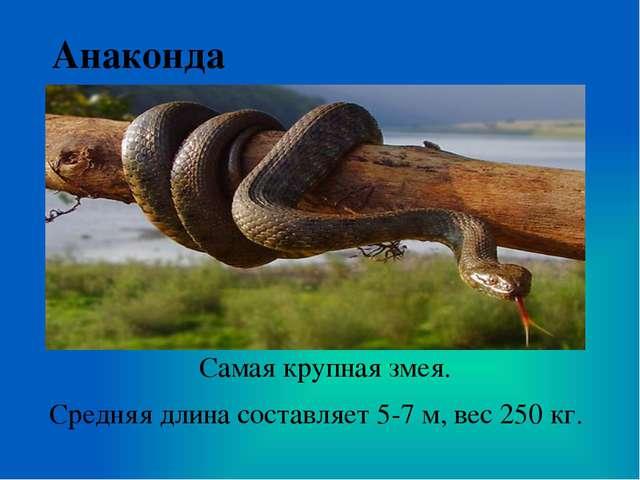 Анаконда Самая крупная змея. Средняя длина составляет 5-7 м, вес 250 кг.