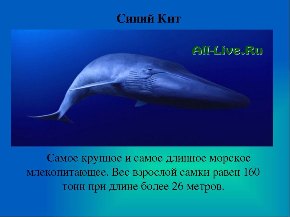 Синий Кит Самое крупное и самое длинное морское млекопитающее. Вес взрослой с...