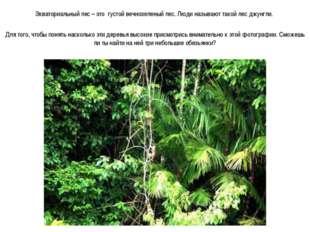 Экваториальный лес – это густой вечнозеленый лес. Люди называют такой лес джу