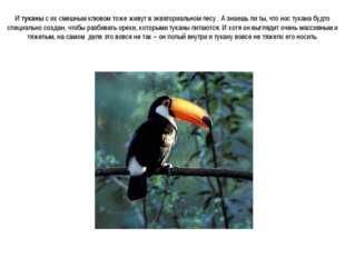 И туканы с их смешным клювом тоже живут в экваториальном лесу . А знаешь ли т