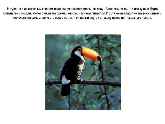 И туканы с их смешным клювом тоже живут в экваториальном лесу . А знаешь ли т...