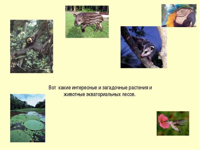 Вот какие интересные и загадочные растения и животные экваториальных лесов.