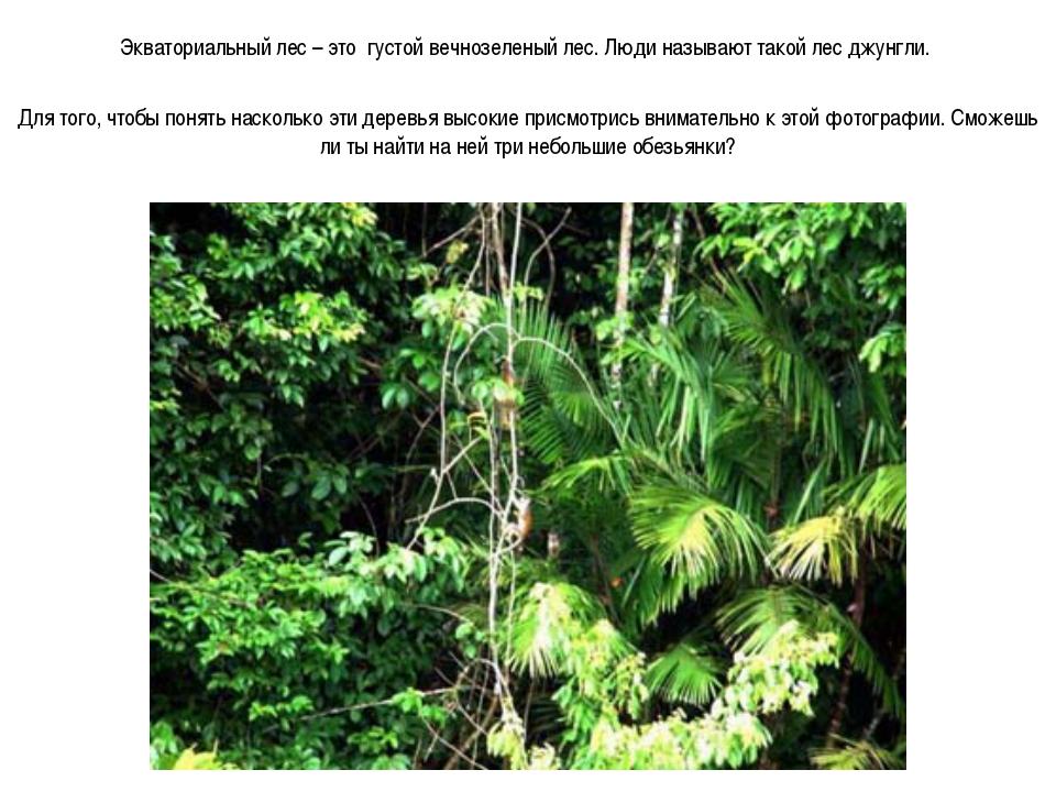 Экваториальный лес – это густой вечнозеленый лес. Люди называют такой лес джу...